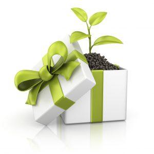 green gift fa
